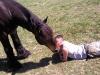 complicite-cheval
